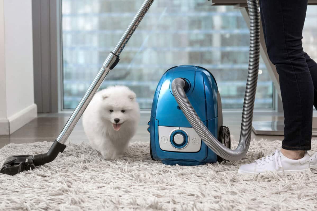 233567 2000x1336 woman vacuuming shag rug