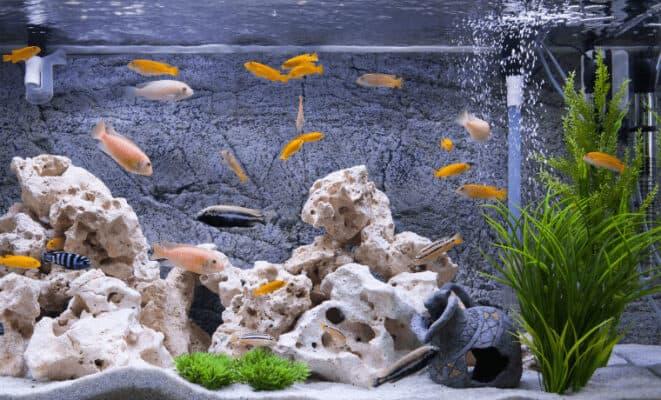 quietest aquarium filter